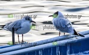 Φωτογραφία Πουλιά του νερού